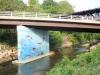 natural-history-of-hawksbill-creek